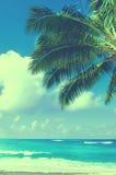 Palmettes au-dessus d'océan en Hawaï (style de vintage) Images stock