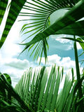 palmettes avec le fond de ciel bleu Image libre de droits