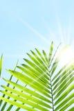 Palmettes contre un ciel d'été Images libres de droits
