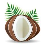 Palmettes de noix de coco Image stock