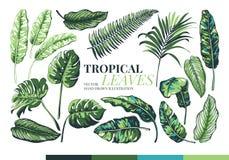 Palmettes et feuilles tropicales de jungle illustration stock