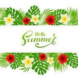 Palmettes et fleurs sur le fond tropical blanc Photographie stock