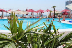 Palmettes sur le fond brouillé de la piscine, des parasols, des personnes et de la mer Photographie stock