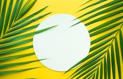 Palmettes tropicales avec le porte-cartes de livre blanc sur la couleur en pastel Photo stock