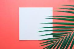 Palmettes tropicales avec le porte-cartes de livre blanc sur le pastel Images libres de droits