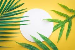 Palmettes tropicales avec le porte-cartes de livre blanc sur le pastel Photographie stock