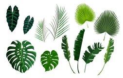 Palmettes tropicales de vecteur, feuilles de jungle réglées photo stock