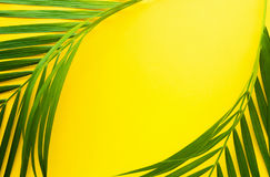 Palmettes tropicales sur le fond de couleur en pastel Feuille de jungle Photo stock