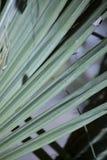 Palmetto Буш Стоковое фото RF
