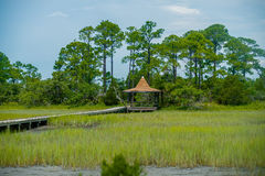 Palmetto forest on hunting island beach Stock Image