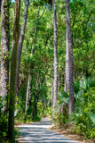 Palmetto forest on hunting island beach Stock Photography