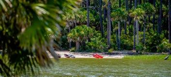 Palmetto forest on hunting island beach Stock Photos