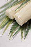 Palmetto ingredient. Low calorie meal consumed in Brazil Stock Images