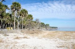 Palmetto trees on the beach and a calm Atlantic Ocean at Hunting Island State Park. In South Carolina stock photo