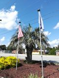 The palmetto stock photography