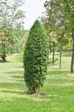 Palmety drzewne Zdjęcie Stock