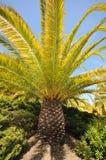 Palmeunterseite und -zweige mit Himmel Stockfotografie