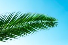 Palmeurlaub Lizenzfreie Stockfotos