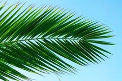 Palmeurlaub Lizenzfreie Stockbilder