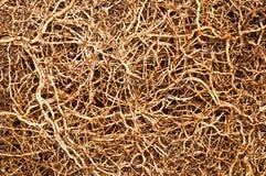 Palmewurzelfaser. Lizenzfreies Stockfoto
