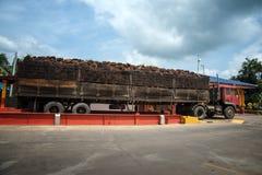 Palmfruit op grote vrachtwagen stock afbeeldingen
