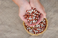 Palmful of color eco beans over basket on linen Royalty Free Stock Images