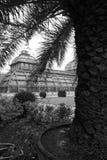 palmhouse fotografia stock