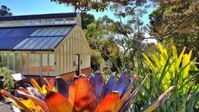 PalmHouse BotanicGarden, Sydney, Australien Royaltyfri Fotografi