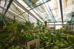 Palmiarnia (Palm Greenhouse) of Walbrzych Stock Images