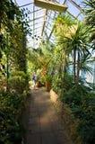 Palmiarnia (serra della palma) di Walbrzych Immagine Stock