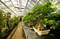 Palmiarnia (serra della palma) di Walbrzych Fotografia Stock Libera da Diritti