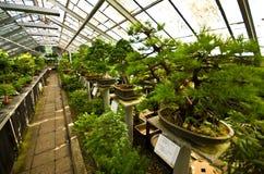 Palmiarnia (serra della palma) di Walbrzych Immagini Stock Libere da Diritti