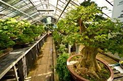 Palmiarnia (serra della palma) di Walbrzych Fotografie Stock Libere da Diritti