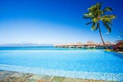 Palmier à côté de piscine Photographie stock libre de droits