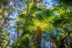 Palmier à hurler Billy Falls Track, situé dans le parc national aspirant de Mt, le Nouvelle-Zélande photographie stock