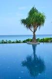 Palmier à la piscine Images libres de droits