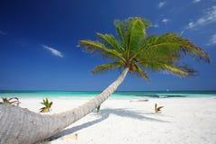 Palmier à la plage Photographie stock libre de droits