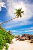 Palmier à la plage de paradis des Seychelles - La Digue photographie stock libre de droits