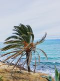 Palmier à la plage de Salou Images libres de droits