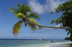 Palmier à la plage de Vallon de beau, Seychelles photographie stock