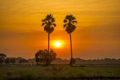Palmier à sucre Image libre de droits