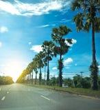 Palmier à sucre sur la route photos stock
