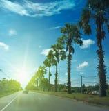 Palmier à sucre sur la route photo libre de droits