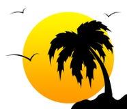 Palmier Photos libres de droits