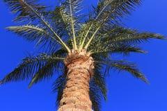 Palmier Photo libre de droits