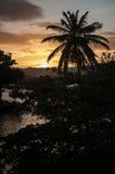 Palmier au coucher du soleil Image stock