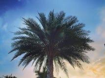 Palmier au coucher du soleil Photos libres de droits