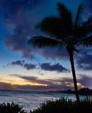 Palmier au crépuscule en Hawaï Photographie stock libre de droits