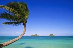 Palmier au-dessus de l'océan photos stock
