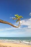 Palmier au-dessus de l'océan Image libre de droits